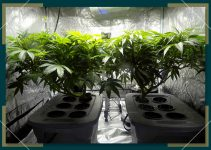 What is a Home Grow Kit?