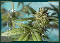 Health Benefits of Marijuana Cannabinoids (THC, CBD, and more)