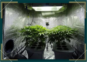 Using Grow Tents for Indoor Growing at Home