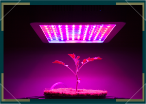 Best LED Grow Lights for Growing Marijuana at Home