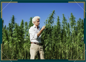 Timing Your Outdoor Marijuana Grow Based on Location
