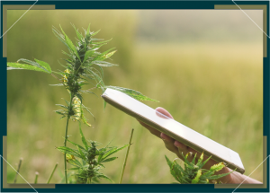 Smartphone Grow Apps for Successful Weed Growing